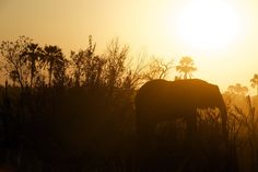 Photographing a Safari usually encompasses an unforgettable trip we remember for the rest of our lives and photographers really get a whole new experience!