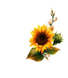 Sunflower Png, Sunflower Drawing, Sunflower Pictures, Sunflower Stencil, Sunflower Foot Tattoos, Paint And Drink, Sunflower Wallpaper, Flower Phone Wallpaper, Painted Wine Glasses