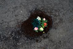 Guerrilla gardening.   Pothole Gardens installation by Pete Dungey.