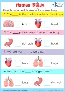 Learn Human Body - Worksheets For Grade 2 You are in the right place about Human Body System graphic organizer Here we offer you the most beautif English Worksheets For Kids, 2nd Grade Worksheets, Science Worksheets, Science Lessons, Science Education, Physical Education, Science Lesson Plans, Health Education, Human Body Lesson
