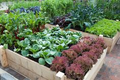 Raised bed gardening.