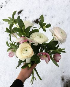 Hellebores, ranunculus & first snow. Happy December 1st