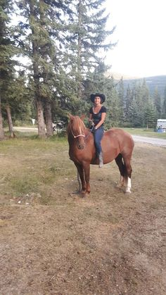 Ya Ha Tinda - Chestnut Canadian Horse Canadian Horse, Black Canadians, Horses For Sale, Ranch, Animals, Guest Ranch, Animales, Animaux, Animal