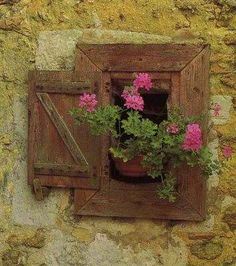 with pink geraniums
