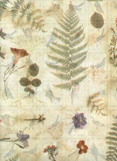 Nature's Gallery TISSUE PAPER  Nature Print by OneDayLongAgo