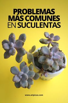 Types Of Succulents Plants, Planting Succulents, Cactus Y Suculentas, Cute Pokemon, Plant Care, Garden Projects, Agriculture, Beautiful Flowers, Stuffed Mushrooms