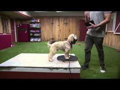 Lucky Dog- Wedding Mark - YouTube