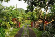 st. kitts and nevis | Tumblr