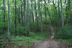 Seidman Park, located just east of Grand Rapids, Michigan, and site of the Hurt the Dirt trail races