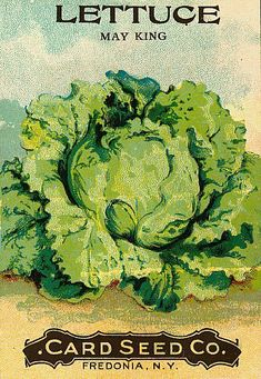 Great Flower Supply Expert Services Available Online May King Lettuce Card Seed Company Garden Catalogs, Seed Catalogs, Illustration Botanique, Botanical Illustration, King Card, Vintage Seed Packets, Seed Packaging, Vintage Gardening, Gypsophila