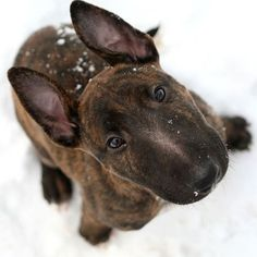 Just trying to catch snowflakes on his nose!