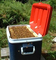 Polystyrene Nucs, Hive modification kit, Modern bee hive gadgets, hives wrapping, bees, bee behavior, beemax, polystyrene hives