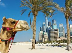 The UAE has never had an incredible track record concerning being eco-accommodating, however lately Dubai and Abu Dhabi, its capital, has been pushing an eco motivation in an offer to get up to speed with the western world on the Green front, while in the meantime pull in all the more earth cognizant travelers.