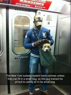 Pit bull in a small bag on NY subway