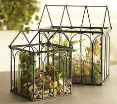 This wire terrarium is just like the one Cinnamon, our mischievous plant loving cat, decided to demolish last week.