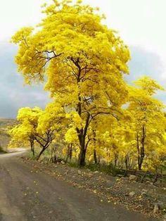 """""""Na vida, todos somos semeadores... Uns semeiam flores e descobrem belezas, perfumes e frutos. Outros semeiam espinhos e se ferem nas suas pontas agudas. Ninguém vive sem semear, seja o bem, seja o mal... Felizes são aqueles que, por onde passam, deixam sementes de amor, de bondade, de afeto...""""  _____Divaldo Pereira Franco 💜  Semeando Palavras ao Coração"""