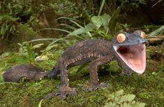 Madagaskar Tiere auf Madagaskar Reiseführer