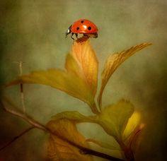Подборка макроработ Менди Дишер (Mandy Disher) [Менди Дишер, Mandy Disher, фотохудожник, макро, макросъемка, насекомые]