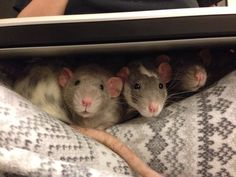 """""""Sometimes, family is all you have…"""" 