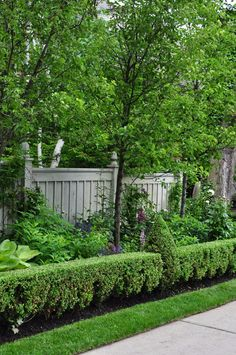 Three Dogs in a Garden: A Poolside Garden in Forest Hill, Ontario boxwood