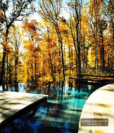 infinity pool in the woods