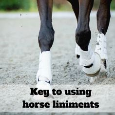 Avoid muscle stiffness in your horse this spring by implementing these simple tips into your riding routine! > http://hubs.ly/y0zCMj0