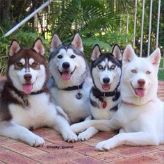 Hey folks! The weekend is finally here! You know the drill: it's time to let the animals out! We saw quite a few cat articles this week, so here's one for you dog lovers out there! You know, we always try to play fair.  Introducing the hottest Husky family on Instagram, right after the break!