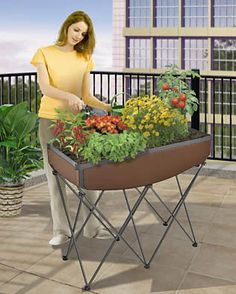 Find This Pin And More On Organic Gardening Tips.