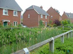 Photo: Part of the SuDS scheme in Elvetham Heath.