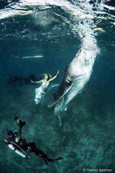 Who said mermaids didn't exist