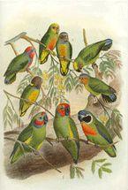 Multi Colour Parrots (Yellow Flowers)