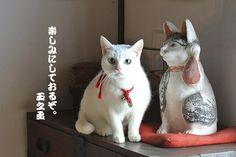Twitter / nekozamuraiinfo: 玉之丞さま、明日は大宮、新宿、幕張で皆の者に会えますなぁ。 #猫侍 #白猫