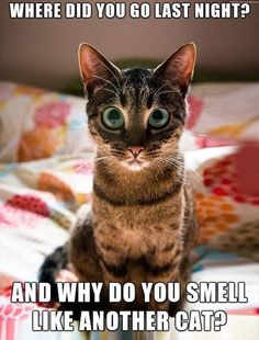 Tag for cute kitten pictures with funny captions : cute kittens dump Funny Cat Fails, Funny Cat Compilation, Funny Cats And Dogs, Funny Cat Memes, Funny Cat Videos, Funny Animal Pictures, Funny Quotes, Kitten Videos, Animal Pics
