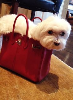 Pets must travel in style too.