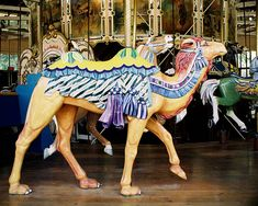 Camel outside row stander. The 1914 Herschell-Spillman Carousel at Golden Gate Park San Francisco, CA. Photo show courtesy of Aaron Shepard