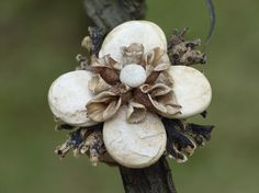 This ring is made of plant material, all throw away things. Seeds of the pumpkin, seeds of a weed, the shell of a starfish, lichen and birch bark.