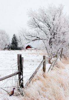 45 Best Painting landscape Winter Snow Scenes Ideas – Page 23 of 45 – Veguci – Landscaping 2020 Winter Szenen, Winter Love, Winter Magic, Winter Colors, Fotografia Macro, Snow Scenes, Winter Pictures, Nature Pictures, Winter Beauty