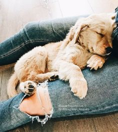 Cute Dogs And Puppies, I Love Dogs, Doggies, Dalmatian Puppies, Puppies Puppies, Cute Baby Animals, Funny Animals, Cute Creatures, Mans Best Friend