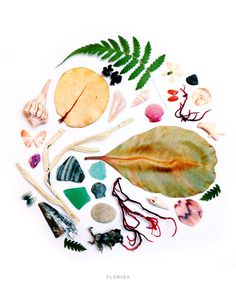 Florida Collection of Natural Treasures