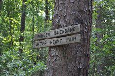 Hitchcock Woods in Aiken SC