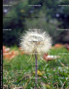 http://www.photaki.com/picture-soft-flower-and-grass_53259.htm