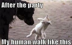 after the party my human walk like this