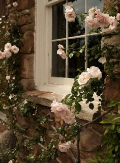 Stone cottage with pink climbing roses.