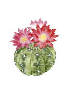 Cactus Drawing, Cactus Painting, Watercolor Cactus, Watercolor Paintings, Succulents Painting, Watercolor Succulents, Gouache Painting, Art Paintings, Cactus Rose