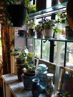 Moon to Moon: Kitchen Plants