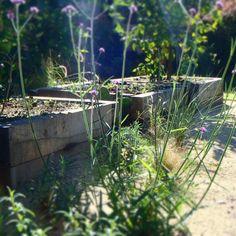 raised edible garden Edible Garden, Aquarium, Plants, Gardens, Garden Landscaping, Atelier, Vegetable Gardening, Plant, Aquarius