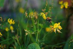 #Schnappschuss aus dem #Garten und per Zufall eine #Biene erwischt!
