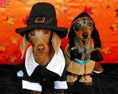 Another fact not in the history books: Doxies were at the first Thanksgiving. ♥♥♥