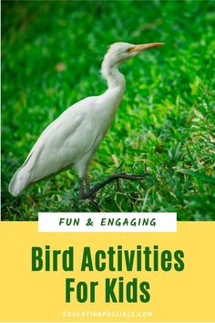 If you're studying birds in science, add some of these fun hands-on activities to your lesson plans. I've also included a bunch of helpful tools you can use in your homeschool. Make your flying creatures study interactive to keep tweens engaged. Nature Activities, Kids Learning Activities, Hands On Activities, Teaching Kids, Science Lesson Plans, Science Lessons, Outdoor Fun For Kids, Nature Study, Middle School Science