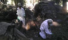 Squirrels with plague and tree-limb deaths darken Yosemite summer. Aug. 2015.